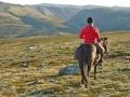 Sauegjeter på hesteryggen